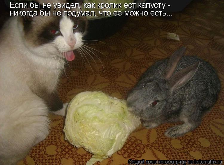 Как отучить толстую кошку все время есть. как можно отучить кота есть комнатные цветы? какие могут возникнуть проблемы у кошек, поедающих цветы