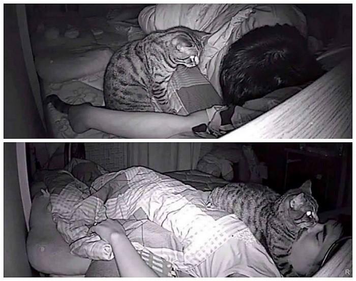 Почему кошки любят спать рядом с хозяином, в ногах у человека, что это может значить?