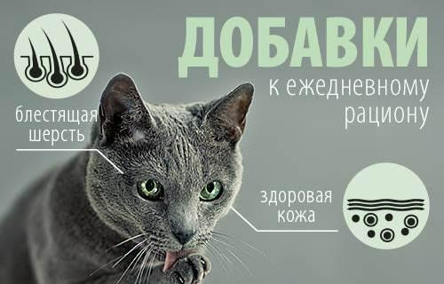 Кормление кошек – типы питания и какой вариант выбрать