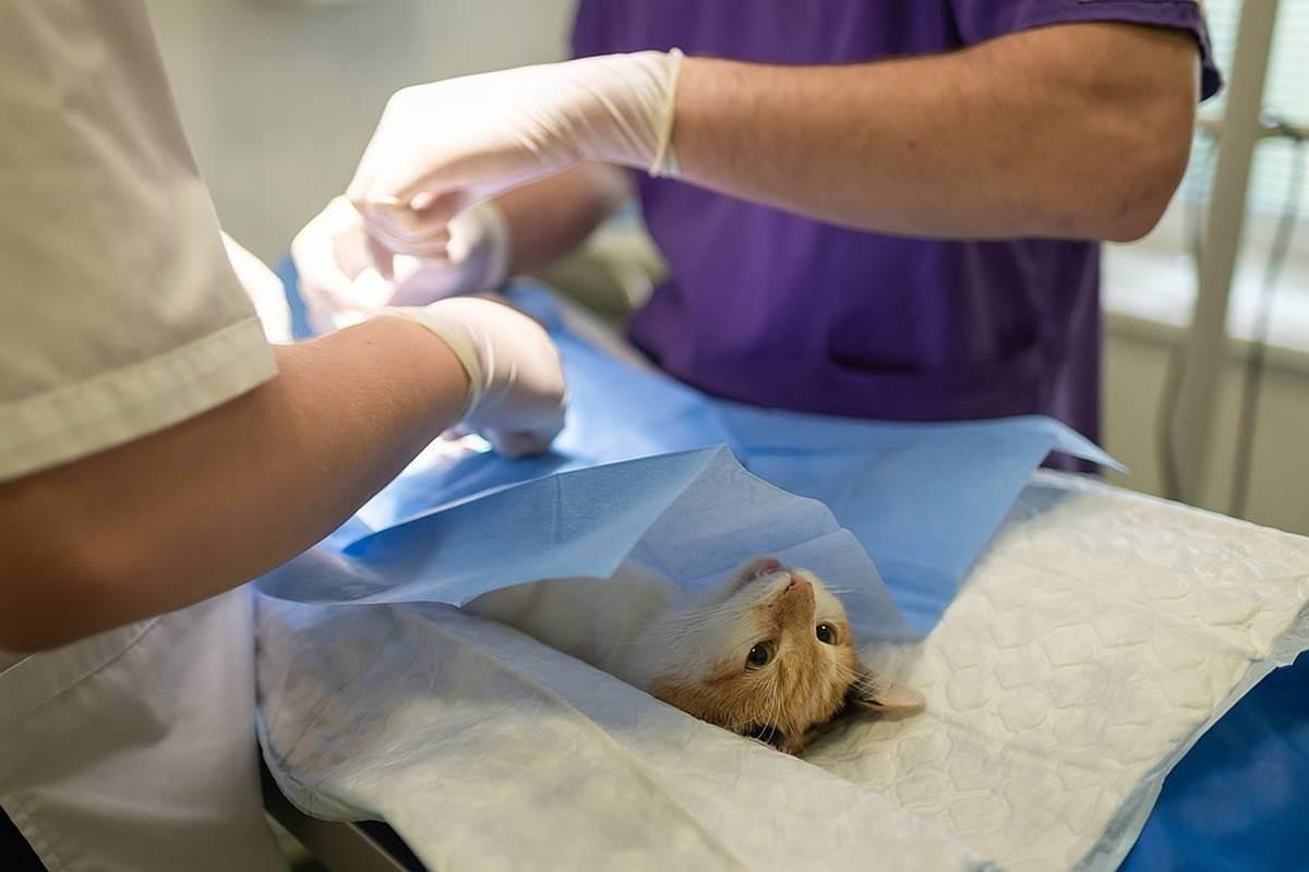 Первая поездка со щенком к ветеринару