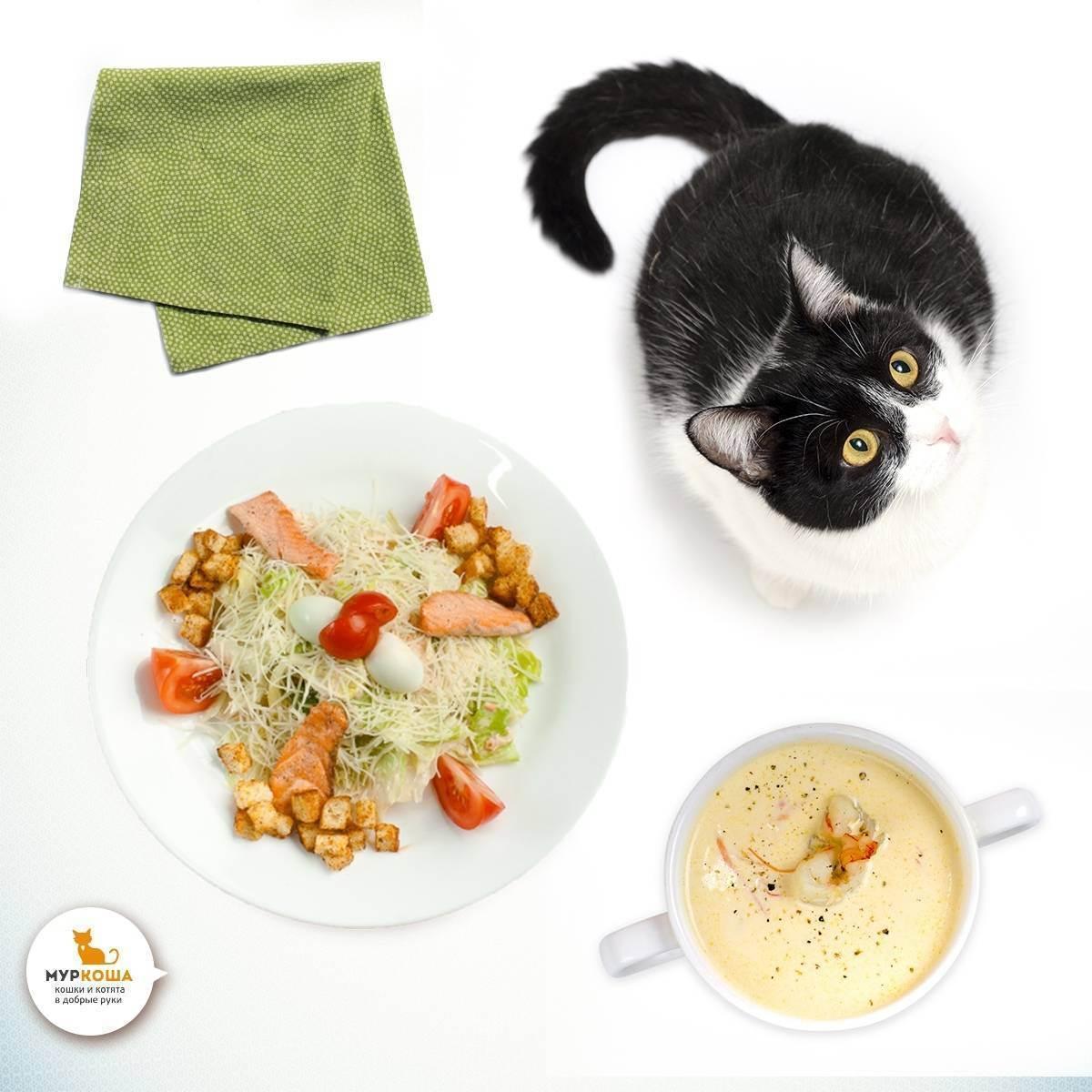 Вреден ли сухой корм для кошек?