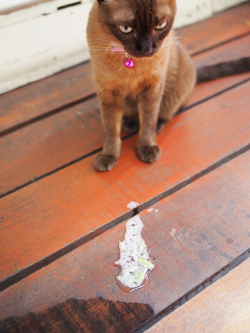 Почему у котенка изо рта сильно пахнет, что делать: причины появления неприятного запаха из кошачьей пасти