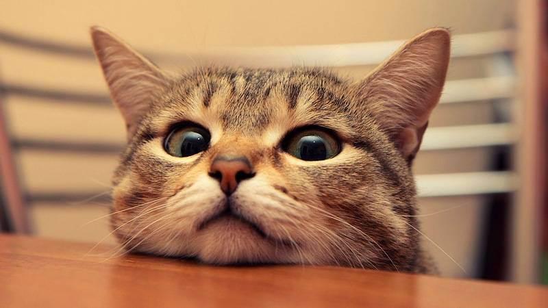 Кошки управляют людьми, а паразиты управляют всеми