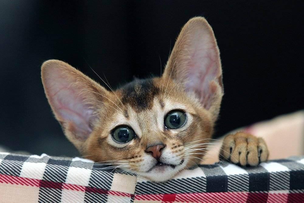 Как кошки управляют людьми