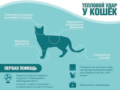 Тепловой удар у кошек - симптомы, лечение, препараты, причины появления | наши лучшие друзья