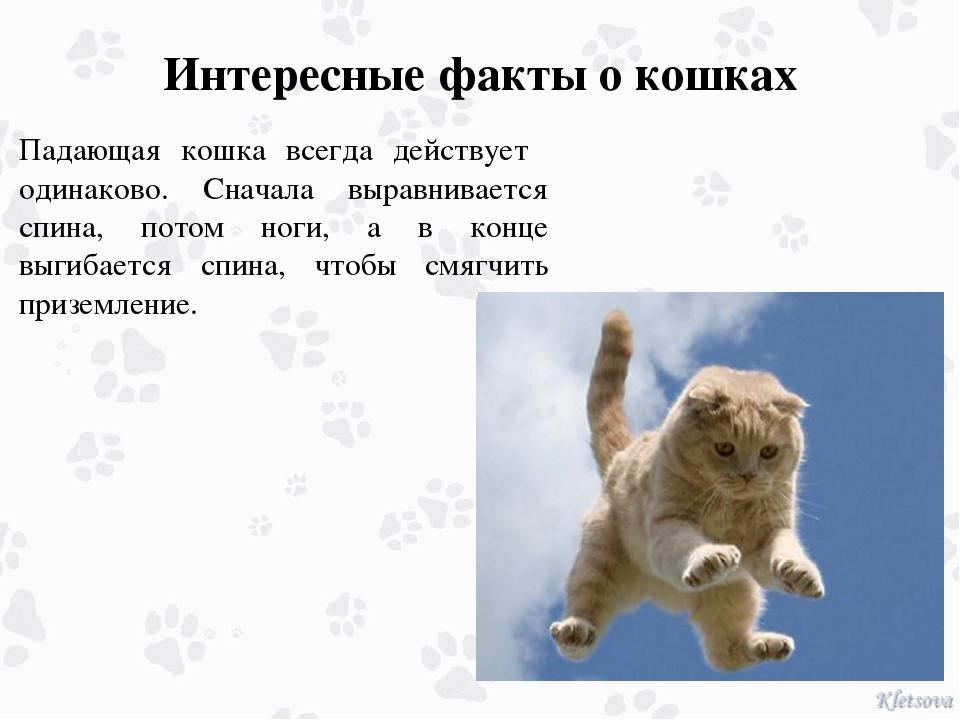 Самые интересные факты о кошках и собаках