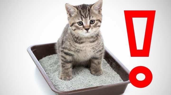 Причины поноса у котов и способы лечения в домашних условиях