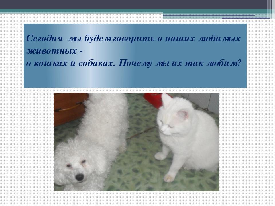 Почему собаки не любят кошек - китайские сказки: читать с картинками, иллюстрациями - сказка dy9.ru