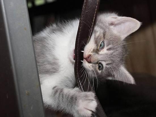 Ребенка поцарапала уличная кошка что делать. что делать, если ребенка поцарапала кошка