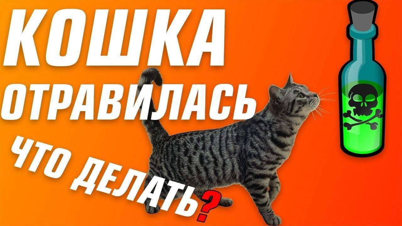 Отравление у кошки, чем можно помочь в домашних условиях