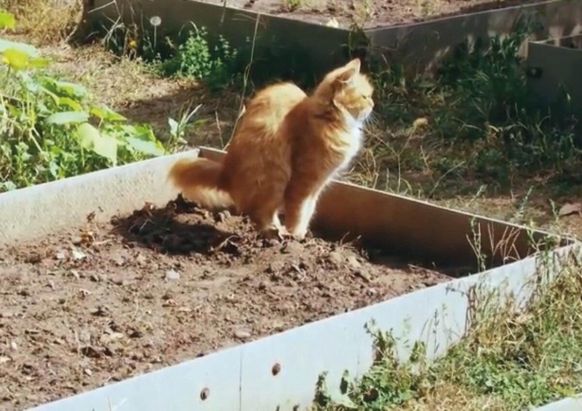 Как отвадить кошек от грядок чтобы не гадили