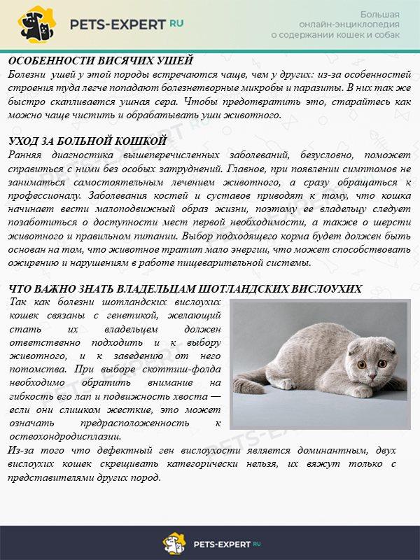 Общие заболевания вислоухих - котешка.ру