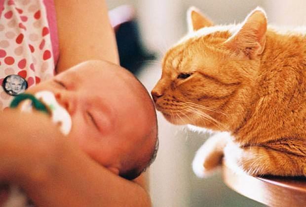 Koshki-i-novorozhdennye - запись пользователя elena (gabrieji) в сообществе домашние животные в категории дети и животные - babyblog.ru