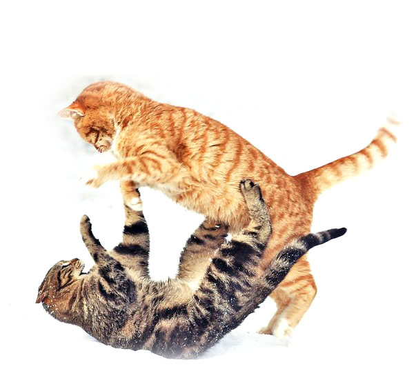 Как успокоить агрессивную кошку, как правильно успокаивать кота при агрессивном поведении