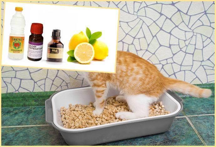Как убрать запах кошачьей мочи: 10 проверенных способов