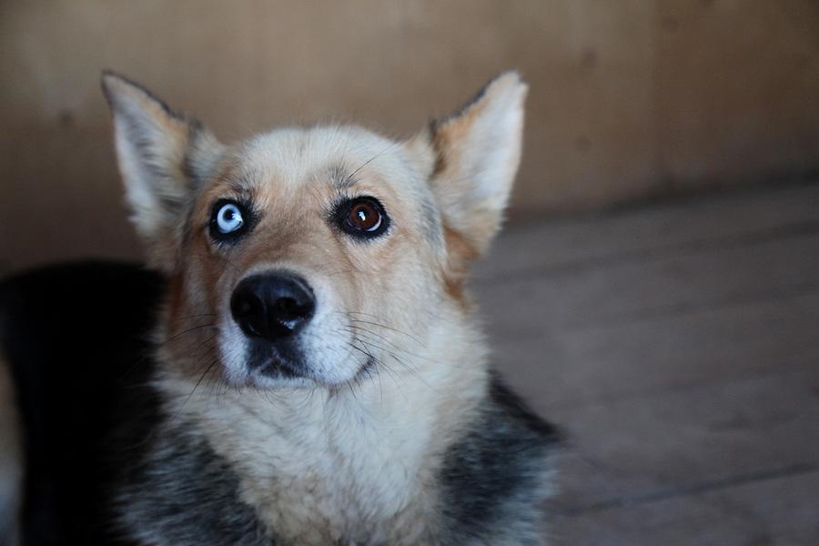 Беспородные щенки и собаки для дома и семьи | сайт о маленьких собачках и не только
