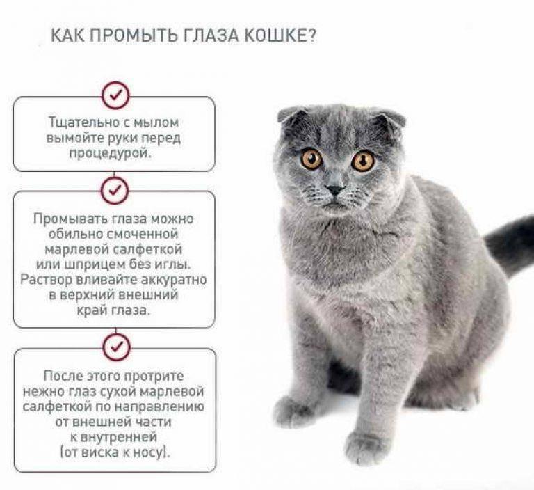 Какая память у кошек: сколько длится