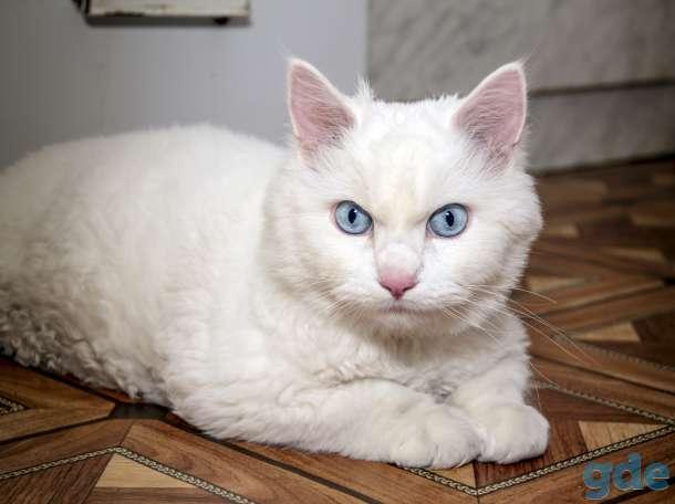 Альбинос-кошка: описание, характер и особенности содержания. ген альбинизма