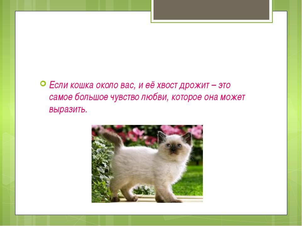 Почему кошка виляет хвостом, машет им в разные стороны или просто шевелит, что это значит?