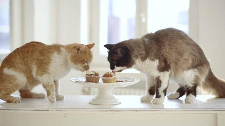 Вредная еда для кошек
