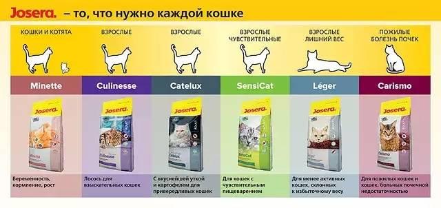 Классы кормов для кошек и котов