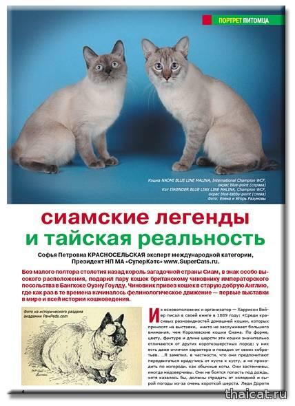 Тайская кошка и сиамская: отличия, сходства, особенности пород, фото