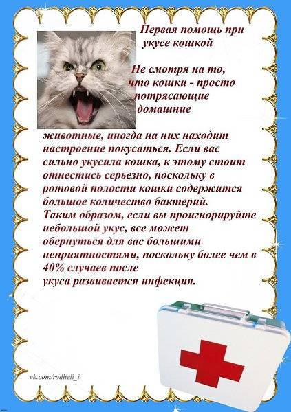 Укус кошки лечение в домашних условиях - муркин дом