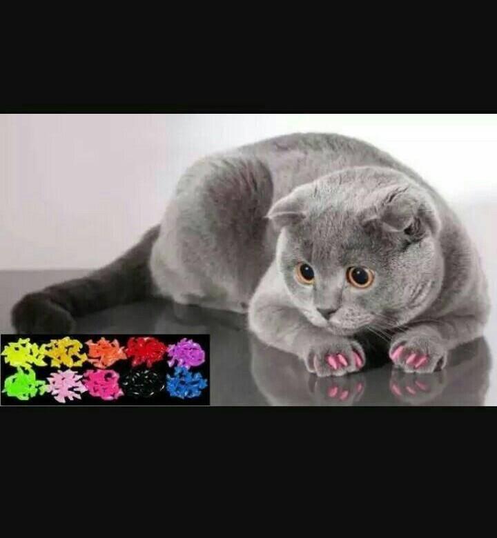 Силиконовые накладки на когти для кошек: преимущества, недостатки, процедура наклеивания