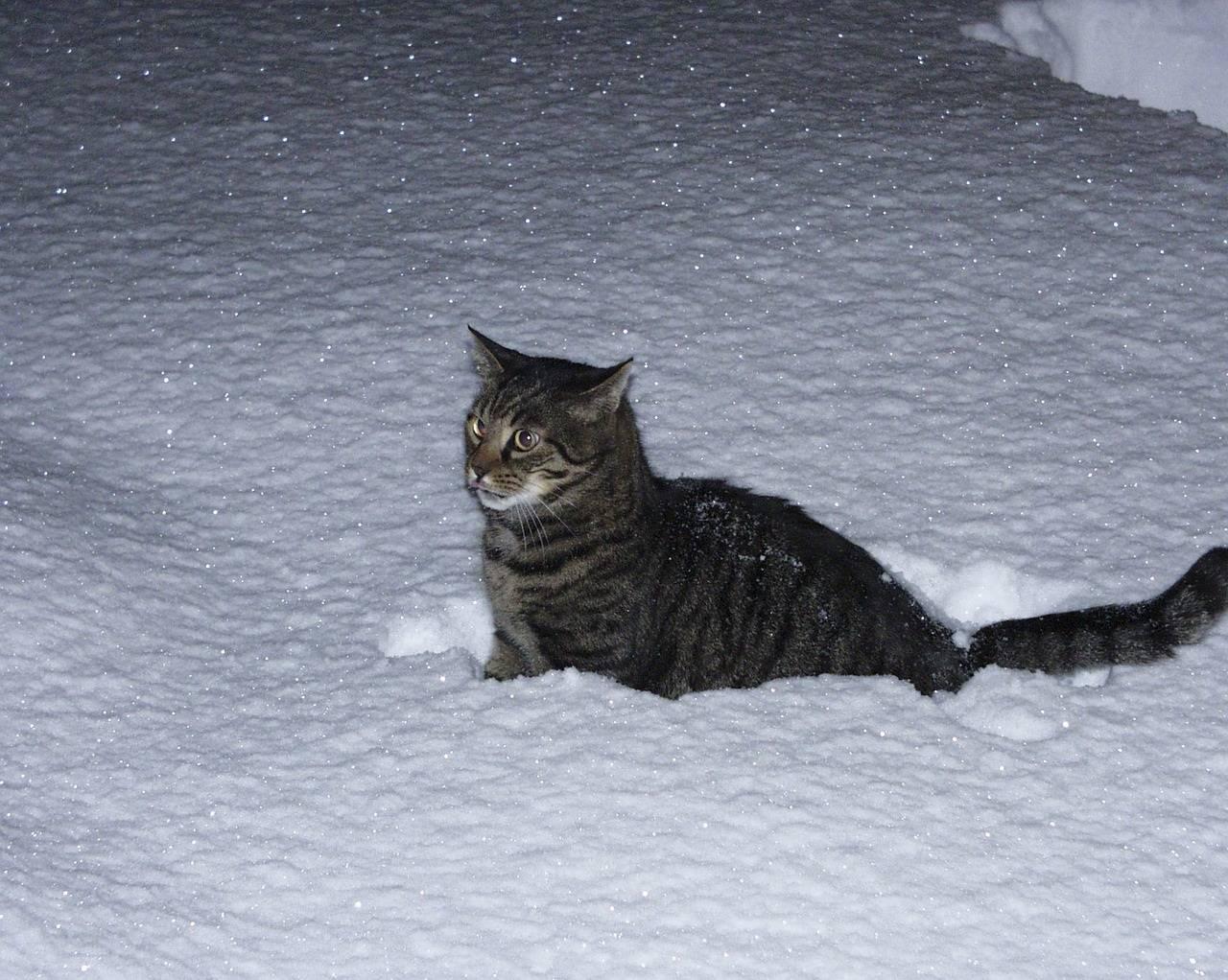 Мерзнут ли кошки зимой на улице - какой мороз выдерживают - kotiko.ru