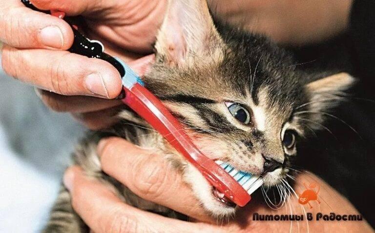 Запах изо рта у кошки: причины заболевания и что можно сделать