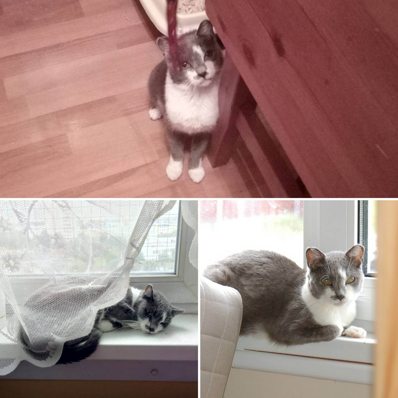 Виды болезней домашних кошек и их симптомы