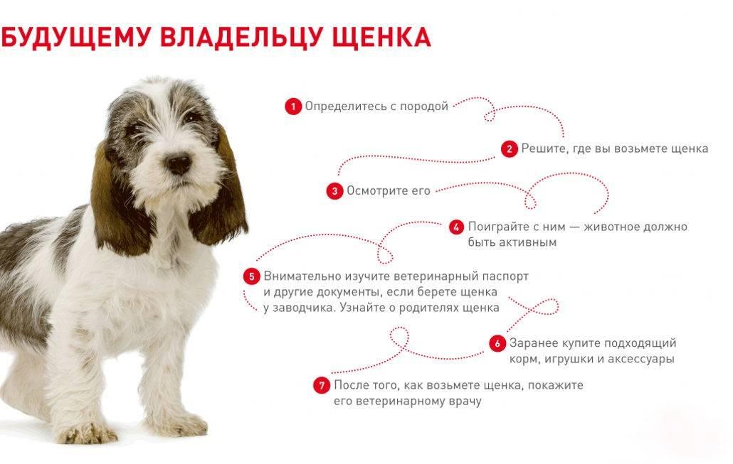 """""""как собака влияет на энергетику человека и жилища?"""""""