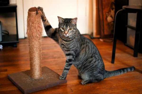 Как наказать кота