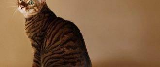 Запоры у кошек - причины, лечение. правильное питание для кошек