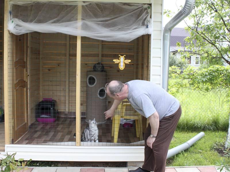 «катио»: 7 основных мест организации прогулок для кота на свежем воздухе