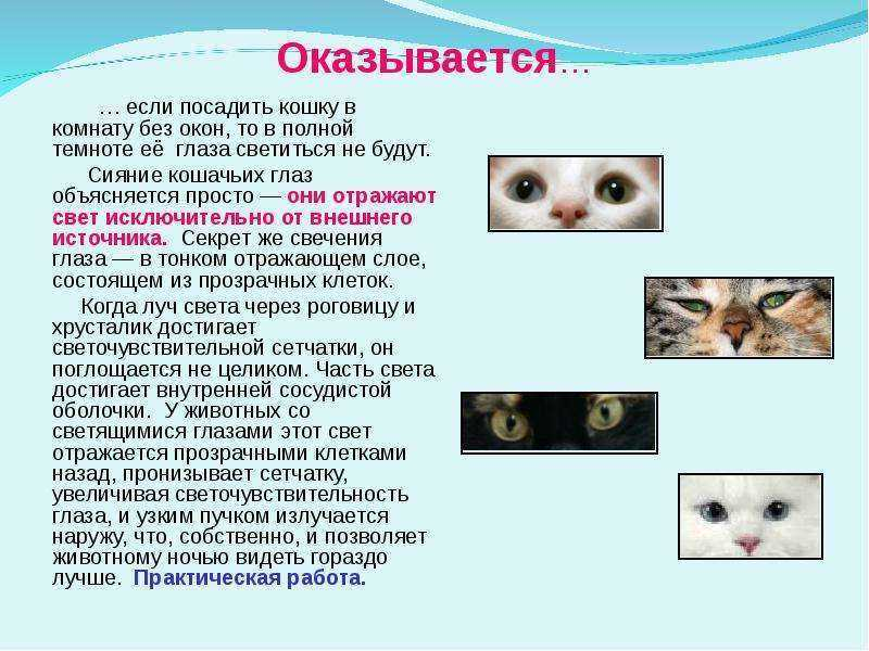 Колобома радужки: как видят люди, у которых «кошачьи» зрачки — тестостерон