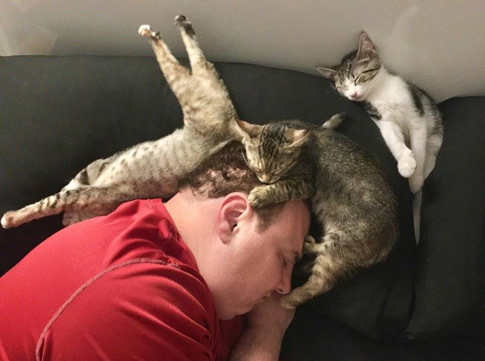 Почему кошка спит в вашей постели: приметы и что это значит?