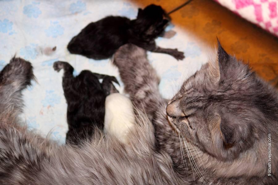 Когда у котят открываются глаза после рождения: через сколько дней малыши начинают видеть когда у котят открываются глаза после рождения: через сколько дней малыши начинают видеть