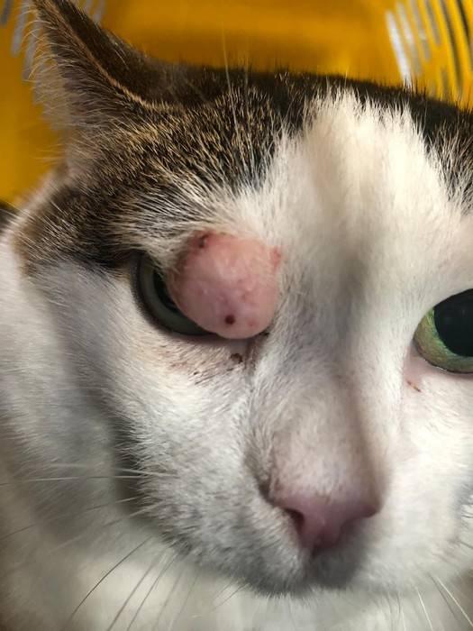 Облысение у кошек причины и профилактика - zhivomag