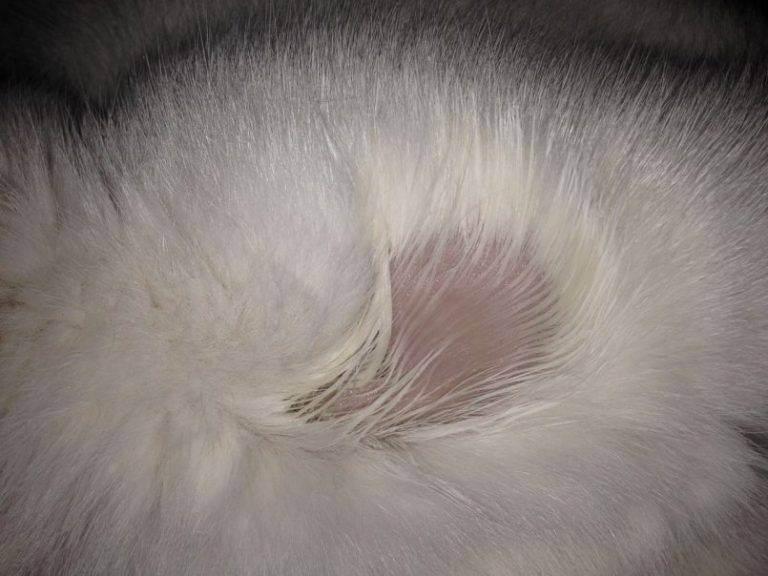 У кошки выпадает шерсть: почему это происходит и чем ей помочь?