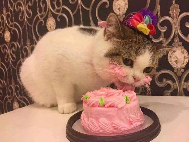 Можно ли давать сладкое кошкам