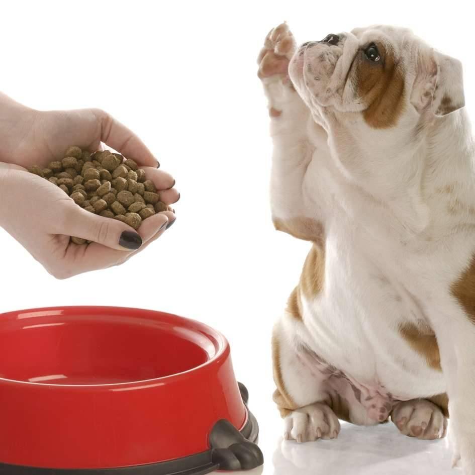 Можно ли кошкам сухой корм – польза или вред?