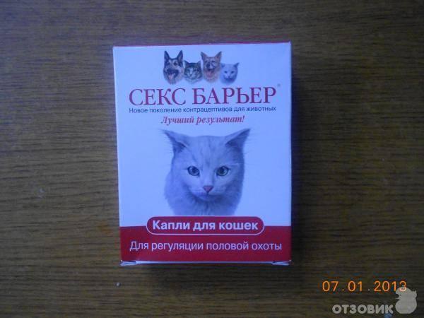 4 вида уколов для кошек вместо стерилизации: гормональные, противозачаточные, чтобы не гуляла