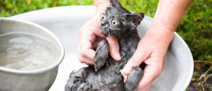 Как помыть кошку? важные правила и рекомендации