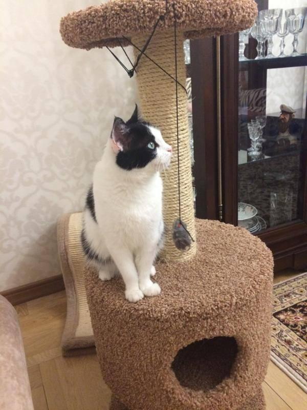 Как приучить кошку к когтеточке - взрослую, котёнка, что можно использовать
