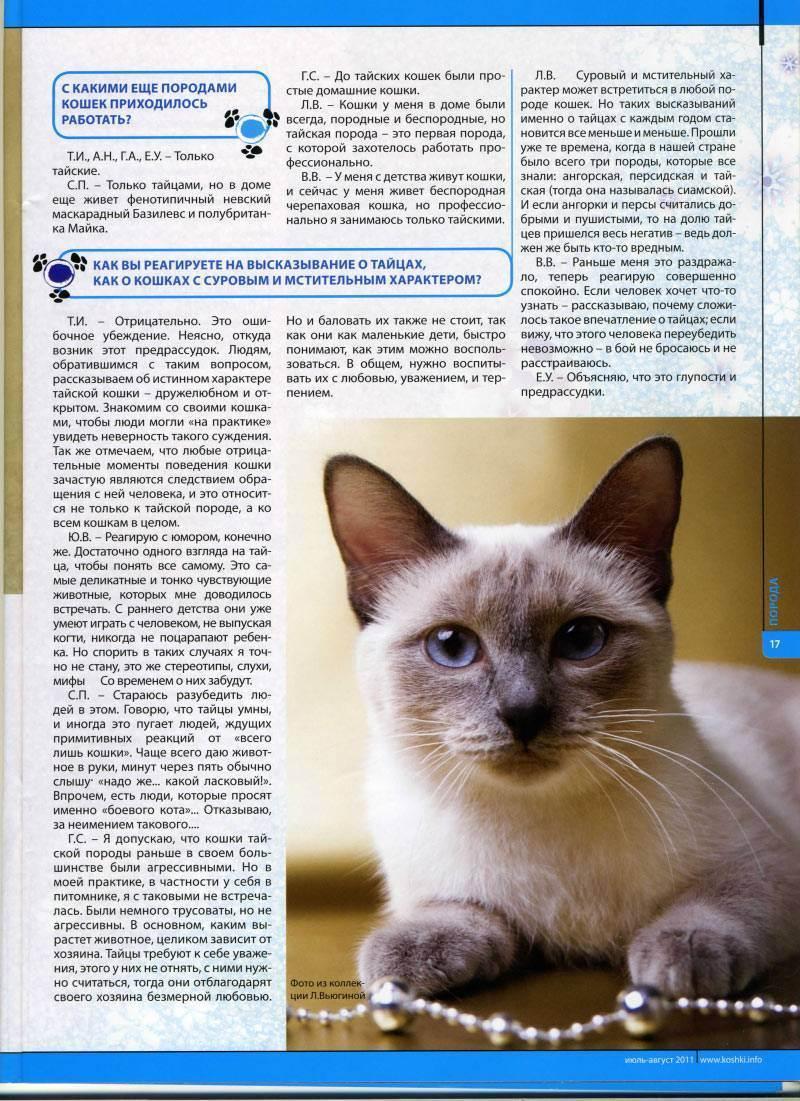 Тайская кошка: описание породы и характера, особенности ухода, цена, фото