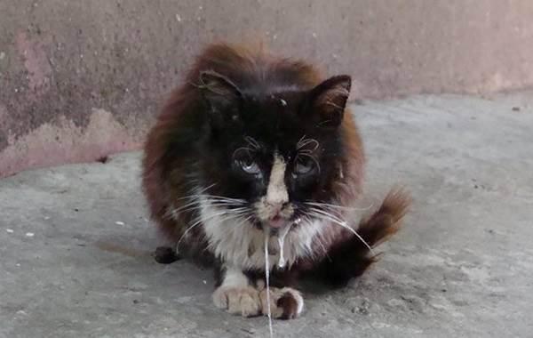 Первые признаки бешенства у кошек - как понять что у кота бешенство?
