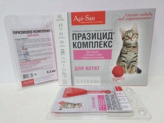 Празицид для кошек: суспензия и таблетки