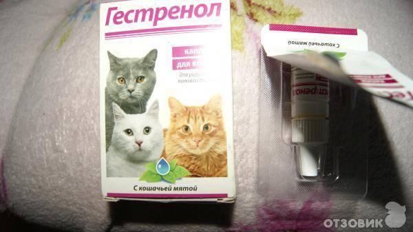 Что дать кошке чтобы не просила кота народные средства