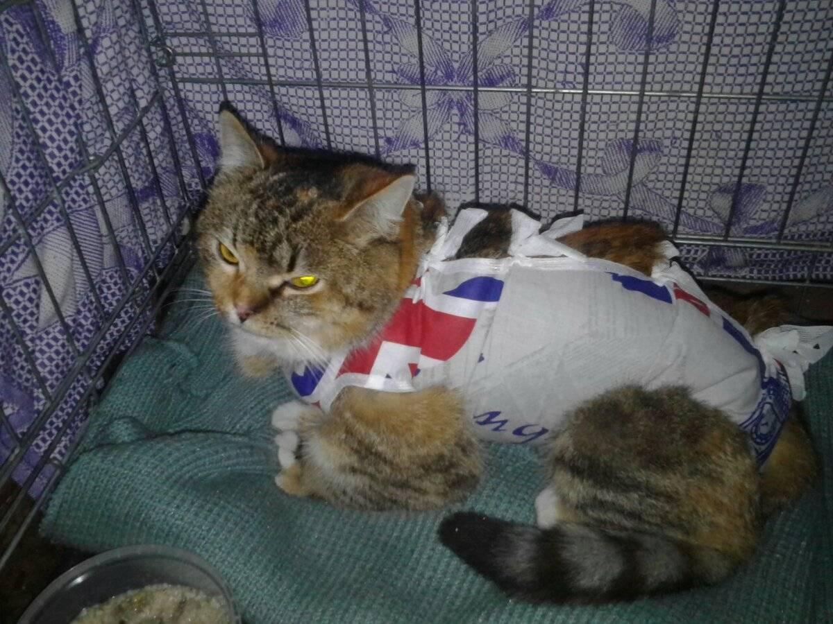 Эвтаназия кошки: показания и методы